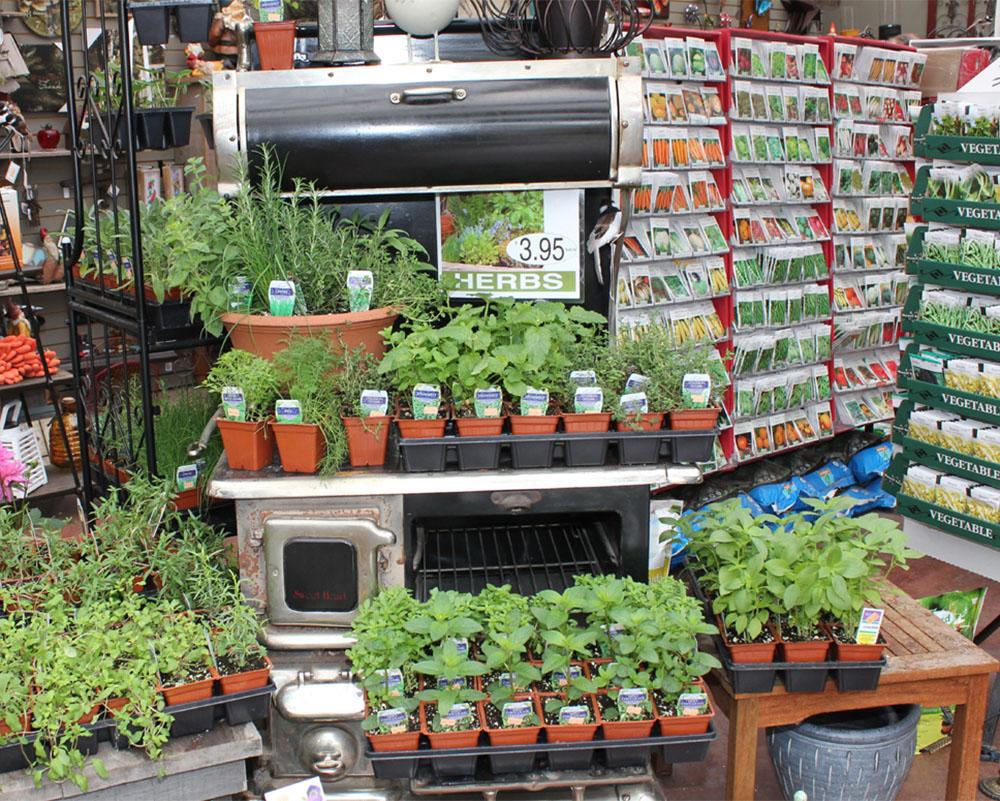Garden Centre: Masstown Market